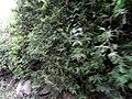 桂林市冠岩郊区景色 - panoramio (26).jpg