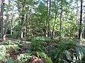 -2018-09-25 Edwards's Plantation, Aylmerton (4).JPG