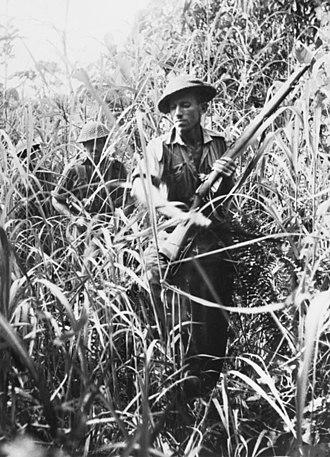 Battle of Buna–Gona - A patrol pushes its way through thick kunai grass.  AWM014181