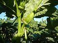 01905jfPaddy fields Arterial Road Bypass Tambubong Caingin, San Rafael, Bulacanfvf 18.jpg