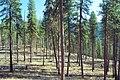 03-05-00, trees - panoramio.jpg