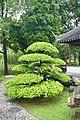 048 Spreading Tree (40466923671).jpg
