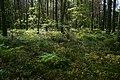 07-257-5001 ліс у Шацькому НПП.jpg