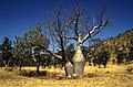 1997 Kakadu, North Territory, Australie.jpg
