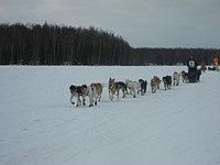 2008 Iditarod Willow (2312099907).jpg