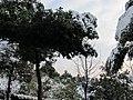 2010年12月15日夜里的那场雪 - panoramio (15).jpg