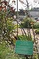 2011 Houlgate (France) le rosier de Proust.jpg