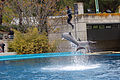 2012-05-01 Dolphin Show Madrid anagoria 01.JPG