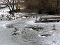 2012 'Seegfrörni' - Greifensee - Niederuster 2012-02-16 13-27-27 (SX230).JPG