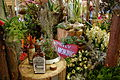 2013 Melbourne International Flower and Garden Show (8585127074).jpg