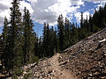 2014-09-15 11 05 00 View up the Bristlecone Trail and the Glacier Trail through Engelmann Spruce forest in Great Basin National Park, Nevada.JPG