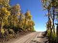2014-10-04 13 54 23 View of Aspens during autumn leaf coloration along Charleston-Jarbidge Road (Elko County Route 748) in Copper Basin about 10.5 miles north of Charleston, Nevada.jpg