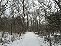 2016-02-15 08 41 16 View west along a snowy walking path in a wooded area along Cain Branch of Cub Run in the Armfield Farm section of Chantilly, Fairfax County, Virginia.jpg