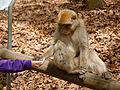 2016-04-21 14-23-57 montagne-des-singes.jpg
