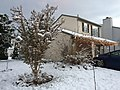 2017-12-10 07 17 57 A house with Christmas lights and snow-covered yard, Crape Myrtle and Forsythia on the morning after a wet snowfall along Tranquility Court in the Franklin Farm section of Oak Hill, Fairfax County, Virginia.jpg