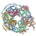 2nn6 exosome rib.png