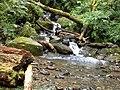 336, Taiwan, 桃園市復興區高義里 - panoramio.jpg