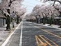 5 Chome Koganehara, Matsudo-shi, Chiba-ken 270-0021, Japan - panoramio (1).jpg