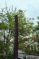 73-101-5024 біогрупа ялини колючої.jpg