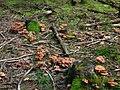 76857 Gossersweiler-Stein, Germany - panoramio (1).jpg