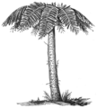 AGTM D332 Tree fern.png