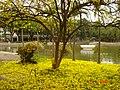 AIT - panoramio - Seksan Phonsuwan (85).jpg
