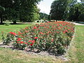 A Rosarium in the Silesian Central Park 13.JPG