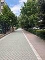 A Street in Eskisehir 2.jpg