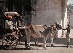 A cattle-drawn carriage carries Jaipur's aristocracy by Jules Gervais-Courtellemont.jpg