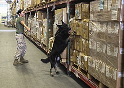 A day in the life of a military working dog 150513-M-DT430-003.jpg