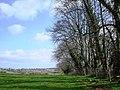 A fine stand of trees near manor farm above Galmpton Creek - geograph.org.uk - 368800.jpg