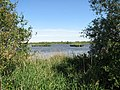A glimpse of Rockland Broad in summer - geograph.org.uk - 1335070.jpg