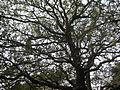 A large tree.JPG