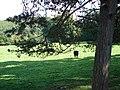 A sylvan scene in Glyn Gwy - geograph.org.uk - 248235.jpg