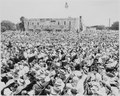 A view of the large crowd gathered in Bolivar, Missouri, to watch President Harry S. Truman dedicate a statue of... - NARA - 199921.tif