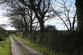 Abbots Bickington, near Five Lanes Cross - geograph.org.uk - 590985.jpg