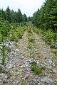 Achaglas Forestry - geograph.org.uk - 876146.jpg