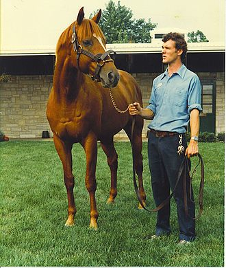 National Museum of Racing and Hall of Fame - Image: Affirmed at Spendthrift Farm 1981