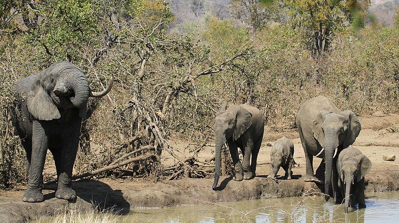 afrikanza-kruger-elephants