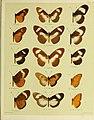 African mimetic butterflies (19394283460).jpg