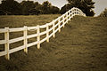 Aged Fences 2.jpg