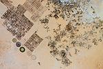 Al Jawf, Libya.jpg