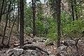 Alexander Canyon - Flickr - aspidoscelis (2).jpg