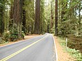 Along Avenue of the Giants (21743520219).jpg