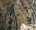 Alpine Swifts Tachymarptis melba (45597230432).jpg