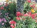 Alstroemeria flower show.jpg