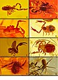 Amber pseudoscorpions.jpg