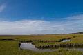 Amelia Island Marshes.jpg