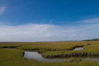 Amelia Island island in the U.S. state of Florida