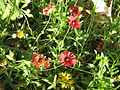 Amin al-Islami Park - Trees and Flowers - Nishapur 047.JPG